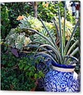 Old Town Potted Cactus Canvas Print