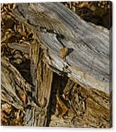 Old Tree Trunks And Leaves Decaying Canvas Print