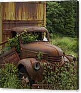 Old Truck In Rain Forest  Canvas Print