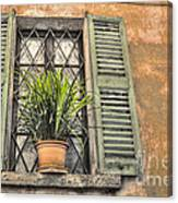 Old Window And A Green Plant Canvas Print
