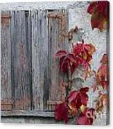 Old Window With Red Leaves Canvas Print