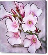 Oleander Blossoms Canvas Print
