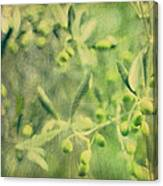 Olive And Leaf Canvas Print
