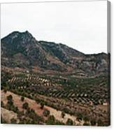 Olive Oil Mountain Canvas Print