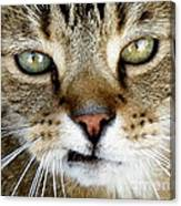 Oliver The Cat Canvas Print