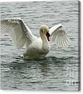 On The Wings Of A Swan Canvas Print