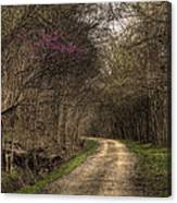 On This Trail Canvas Print