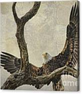 On Wings High Canvas Print