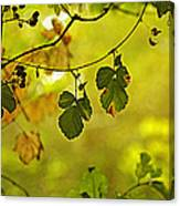 One Autumn Morning Canvas Print