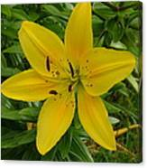 One Flower In Yellow Canvas Print