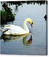 One Foot At Ease Swan Canvas Print