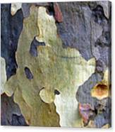 One Good Looking Bark Canvas Print