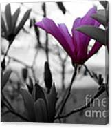 One In The Bunch Canvas Print