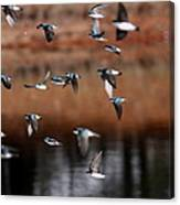 One Last Swallow Canvas Print
