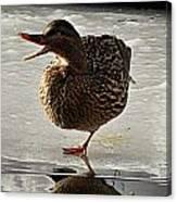 One-legged Duck Canvas Print
