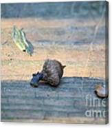 One Less Nut Canvas Print