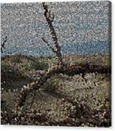 One Majastic Trunk And One Hot Desert Canvas Print