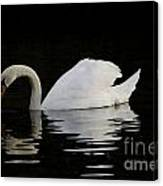 One Swan Canvas Print