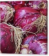 Onion Skins Canvas Print