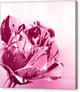 Only A Rose Canvas Print
