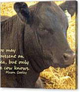 Only Cows Know Canvas Print