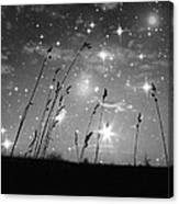 Only The Stars And Me Canvas Print