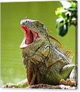 Open Mouth Iguana Canvas Print
