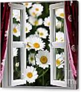 Open Windows Onto Large Daisies Canvas Print