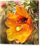 Orange And Yellow Cactus Flower Canvas Print