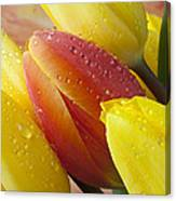 Orange And Yellow Tulips Canvas Print