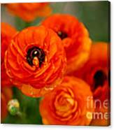 Orange Bulbs Canvas Print