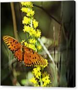 Orange Butterfly On Yellow Wildflower Canvas Print