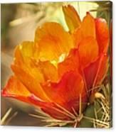 Orange Cactus Flower Canvas Print
