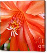 Orange Cactus Canvas Print