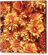 Orange Chrysanthemums Canvas Print