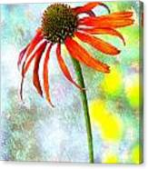 Orange Coneflower On Green And Yellow Canvas Print