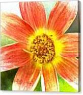 Orange Dahlia On Green Canvas Print