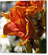 Orange Day Lilies In The Sun Canvas Print