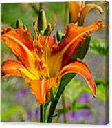 Orange Day Lily Canvas Print