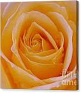 Orange Feel Canvas Print