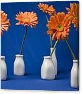 Orange Gerberas Against Blue Canvas Print