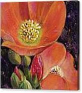 Orange Globe Mallows Canvas Print