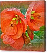 Orange Hibiscus Flowers Canvas Print