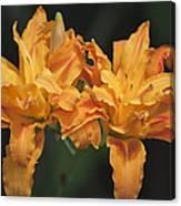 Orange Kwanso Daylily Pair Canvas Print