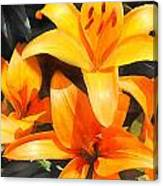Orange Lilies Canvas Print
