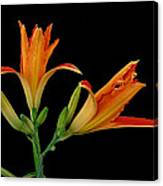 Orange Lily On Black Canvas Print