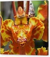 Orange Orchid Clown Canvas Print