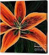 Orange Oriental Lily Canvas Print