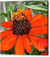 Orange Petals Canvas Print