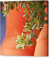Orange Pots Of The Jardin Marjorelle Morocco Canvas Print
